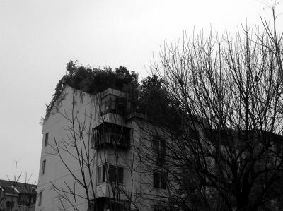 """居民楼顶的""""空中花园""""大片绿色十分引人注目。京华时报记者 卫张宁 摄"""