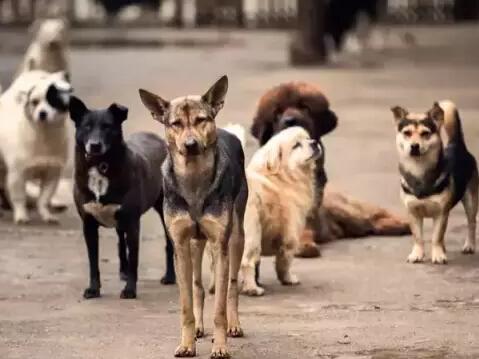 这里是武汉小动物保护协会救助站.