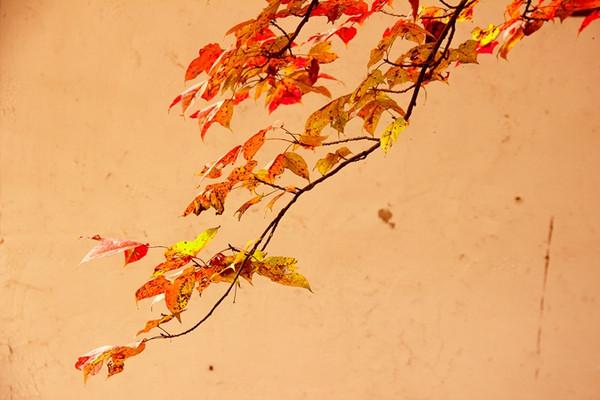 深秋的指南村,美如画