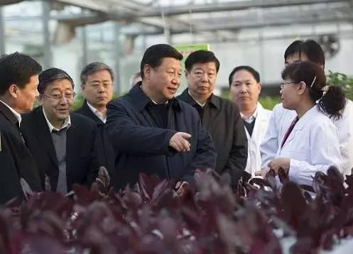 图为:2013年11月27日下午,习近平在山东省农业科学院智能化温室了解农业科技创新情况。