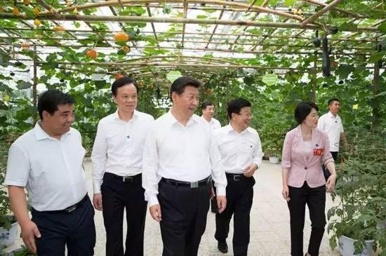 图为:2015年6月16日下午,习近平在遵义县枫香镇花茂村视察现代高效农业智能温控大棚。