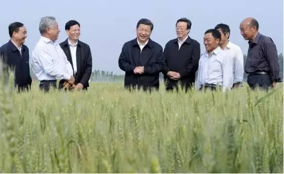 图为:2014年5月9日下午,习近平在尉氏县张市镇高标准粮田察看小麦长势。