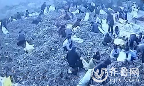 农场监控录像清楚的记录下了哄抢现场的情况。视频中显示,村民毫无顾忌地装农作物。(视频截图)