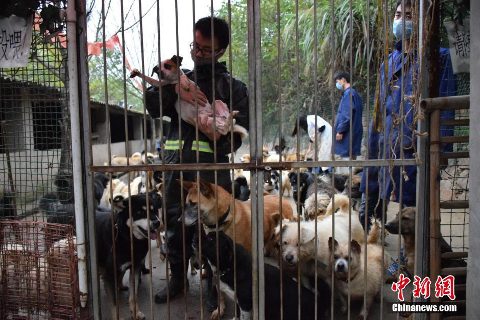 组织,9年来救助流浪动物7000余只