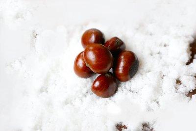 乐山海鲜酒店_北京诺金酒店新增冬季节日体验服务组图
