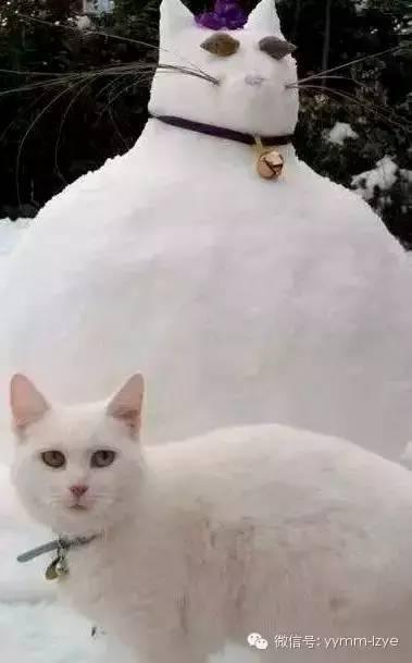 雪地里画画的动物图片