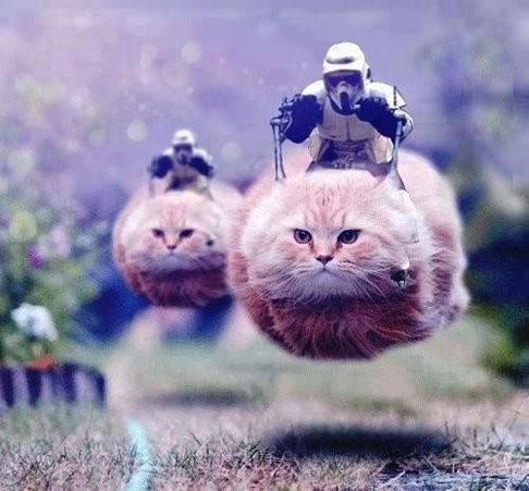 港媒:比利时网民恐中作乐 配合政府发搞笑猫照