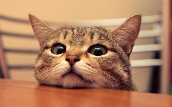 萌萌的!水汪汪大眼猫超可爱