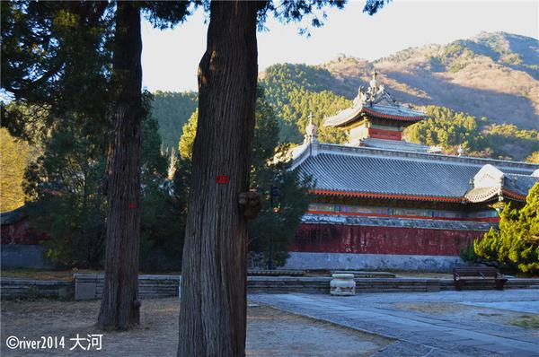 寺庙内古树极多,而大多数的建筑也有数百年的历史 ...