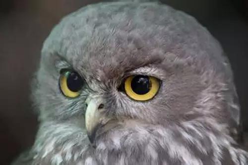 世界最萌的动物都在澳洲了