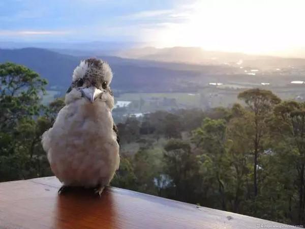 你可以知道,世界最萌的动物都在澳洲了
