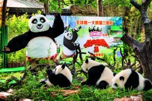 """长隆大熊猫三胞胎""""出演"""" 《功夫熊猫3》"""