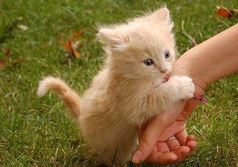 猫咪为什么拉肚子拉稀不吃饭?该怎么办?_宠巴