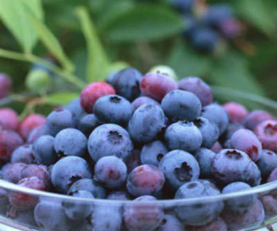什么水果吸脂减肥图片