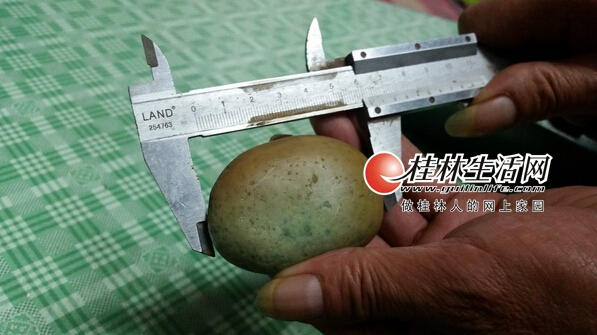 桂林市民珍藏奇石夜间会发光