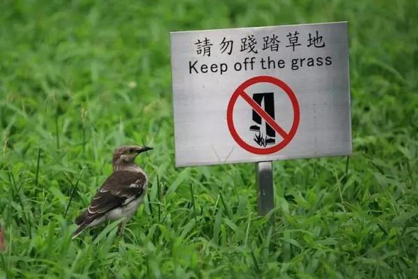 14 在中国的许多大城市里的草坪上都写有