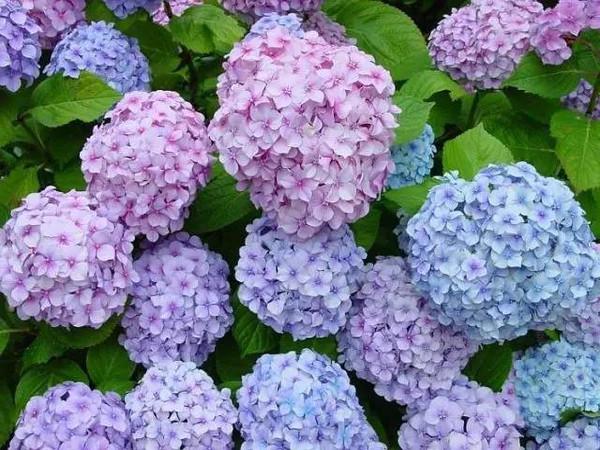 婚礼上最常用的十大鲜花花语及用途详解