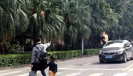 12月3日,柳州市北站路一密斯牵孩儿过马路时,为谦逊的司机点赞。 中新网 图