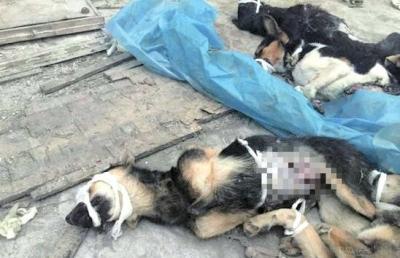 试验用狗被抛弃。收集图像