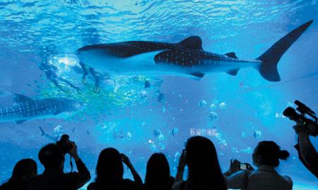 海洋深度动物分布