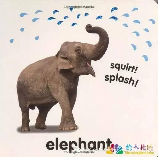 大象 动物 512_509