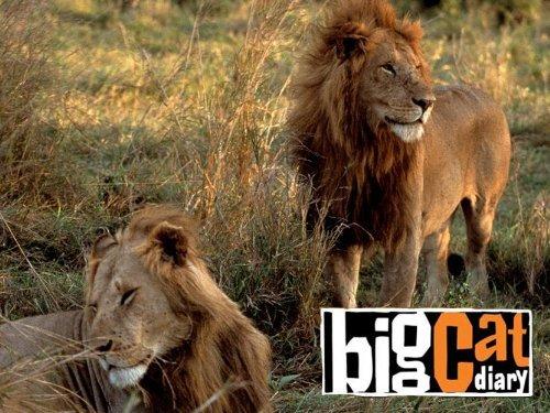 资料图:英国广播公司(BBC)著名生态纪录片《大猫日记》(Big Cat Diary)剧照。
