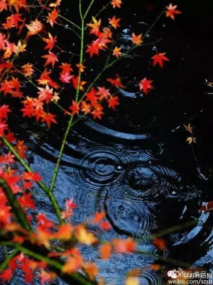 虎丘冬景 雨滴 画 圈映红叶