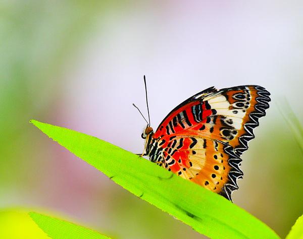 蝴蝶纷飞的地方—温暖如春