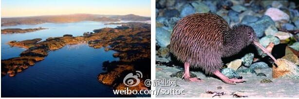 """新西兰的""""海陆空""""野生动物之旅(组图)"""