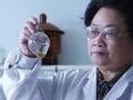 屠呦呦 发现青蒿素
