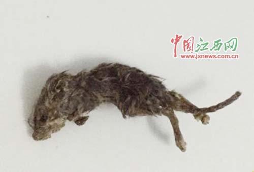 在瓜子里发觉的老鼠(图像来历于收集)