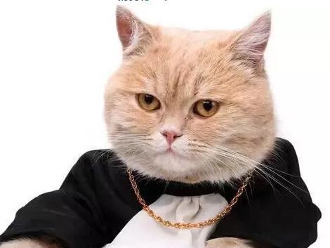 猫也能模仿单位各部门领导表情图片