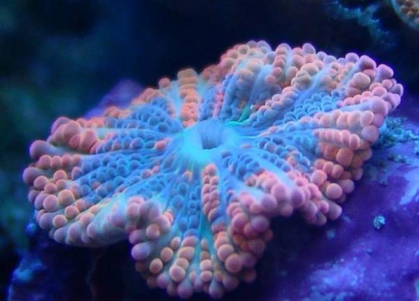珊瑚到底是植物还是动物?