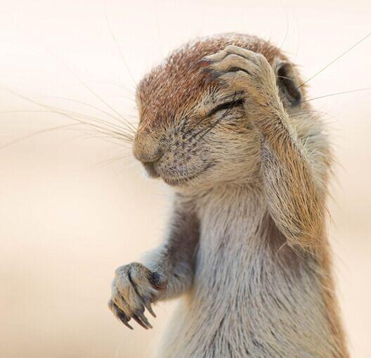 2015表情动物萌萌的小表情们可爱组图(表情动物包聊天图动态到手下载qq机上图片