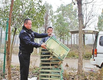 买卖麻雀斑鸠1000余只 男子被刑拘