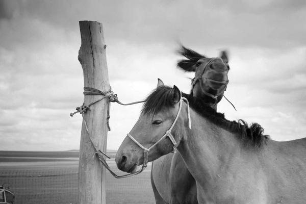 马与人-责 :   同草原上的民族共同相处,繁衍生息,并成为草原民族日常生活