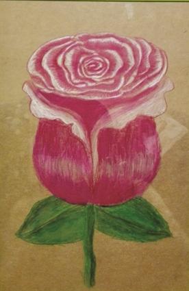 彩铅素描·玫瑰