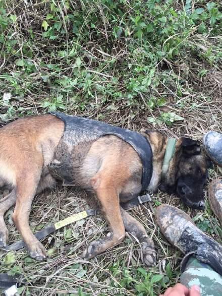 深圳滑坡救援人员和搜救犬席地而睡(图)