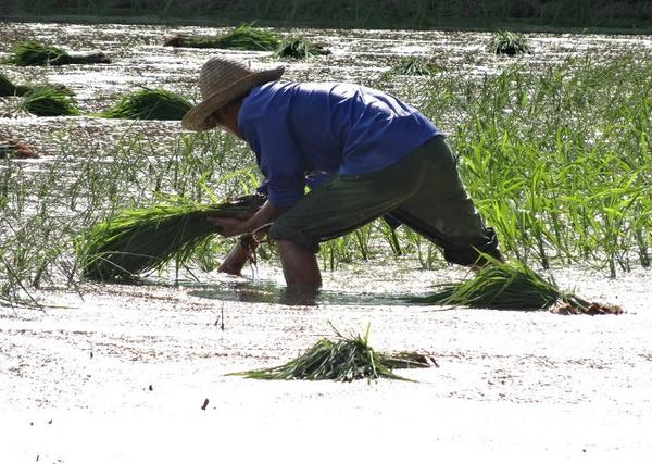 深度揭秘:码农为什么叫做码农?码农到底是什么?