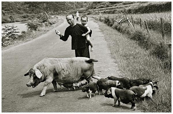 1999-广西-身背孙子放猪的老人