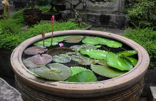 别墅装修:露水庭院竟美!中红颜的香港别墅在哪儿水景图片