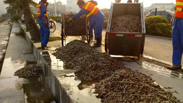 广东珠海海面现大量死鱼绵延近2公里,官方调查称缺氧所致
