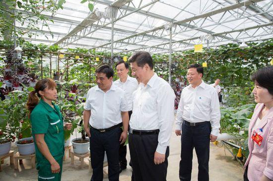 图为:2015年6月16日下午,习近平在遵义县枫香镇花茂村的现代高效农业智能温控大棚,向正在劳动的村民了解增收致富情况。