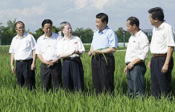 图为:2013年7月22日下午,习近平来到鄂州市鄂城区杜山镇东港村育种基地。