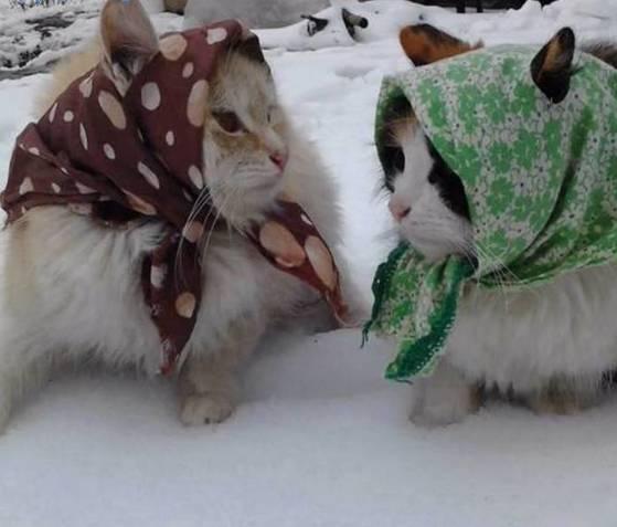 怕冷的动物图片