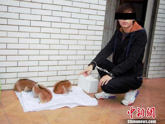 广西破获特大非法出售濒危野生动物案(图)