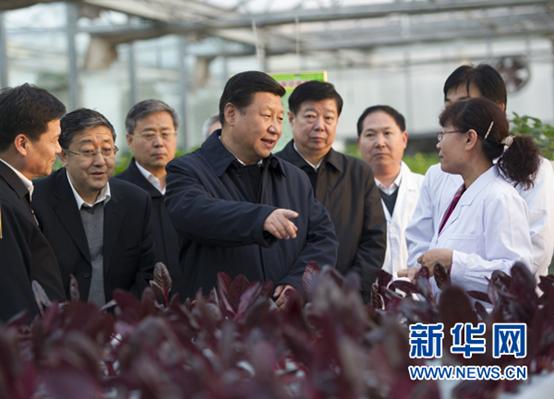 2013年11月27日下午,習近平在山東省農業科學院智能化溫室了解農業科技創新情況。 新華社記者謝環馳