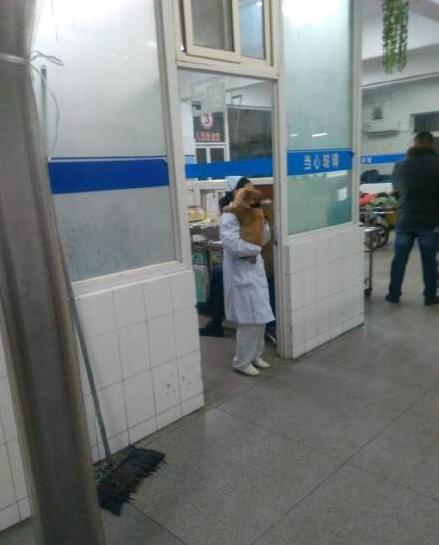 江苏一医院护士抱狗上班 官方称已被停职(图)