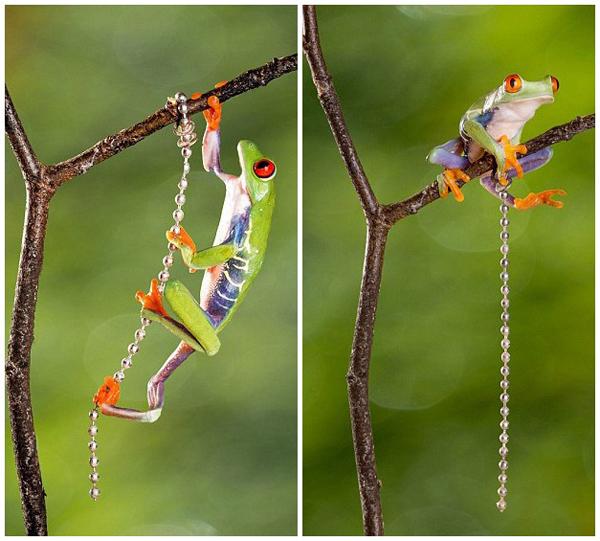 环球网综合报道据英国《每日邮报》12月26日报道,近日,孟加拉国摄影师图勃・乌丁(Kutub