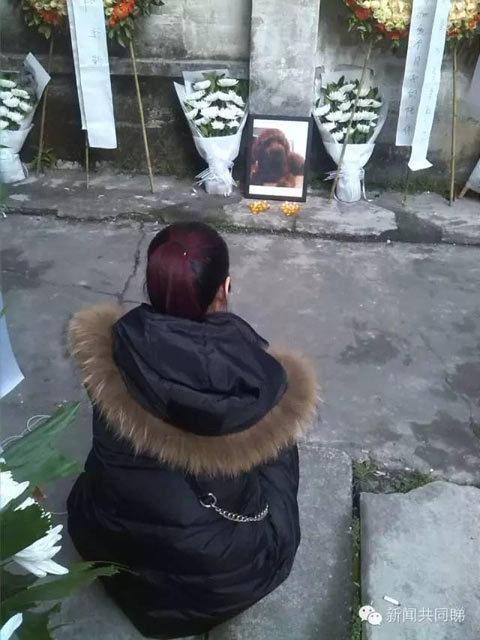 工厂门口的地上摆着蜡烛,一名黑衣女子用音箱播放着佛经,自己则坐在地上低头念经,不时伤心哭泣。工厂大门紧闭,没有人出来。记者询问得知,女子姓叶,曾在该工厂楼上租房两年,不久前搬走了。叶女士说,被打死的狗Bobi是她4年前养的,感情极好。一个星期前,叶小姐去香港出差,Bobi从家中跑出,回到原来居住的工业园,结果被楼下一名工人活活打死。